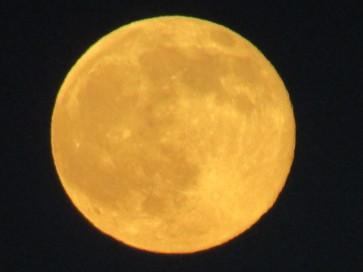 Luna Amarilla.JPG